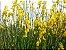 Giesta - 1 Muda - Cultivo Sem Agrotóxico! - Imagem 2