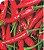 Pimenta Malagueta - 1 Muda - Cultivo Livre De Agrotóxico! - Imagem 1