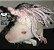 Touca para Ratos - Imagem 9