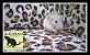 Filhotes Demon's Rats - Imagem 6