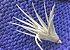 Tillandsia ixioides x aeranthos (Air Plant) - Imagem 1