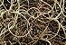 Tillandsia usneoides Var Brasil Gigante (Air Plant) - Imagem 2