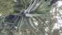 Tillandsia streptophylla (air Plant) - Imagem 2