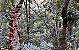 Tillandsia guatemalensis - Imagem 1
