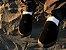 Tênis Folly Nice Black Camu - Imagem 4