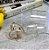 Cinto Tranparente CIRCLE/HEART - Dois Modelos de Fivela - Imagem 6