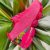 Tênis Trainer FLORIDO - Imagem 2