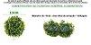 Bolas de Buchinho ou Grama Artificial 13cm - 2 unidades - Imagem 9
