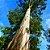 Óleo Essencial Eucalipto Glóbulus - 10ml - Phytoterápica - Imagem 3