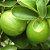 Óleo Essencial Limão-Tahiti - 10ml - Phytoterápica - Imagem 3