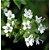 Óleo Essencial Tomilho - 10ml - Phytoterápica - Imagem 3