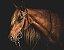 Quadro Decorativo Poster Cavalo - Imagem 1