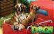 Dogs - Imagem 6