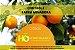 CONTROLE LARVA MINADORA - Auxiliar no controle da larva minadora dos citros (Phyllocnistis citrella) - Imagem 2