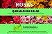 ROSAS - QUEIMADURA SOLAR - Indicado para plantas que sofrem com o excesso de sol ou que tiveram lesões por insolação 30ml - Imagem 2