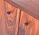 Muda de pau-ferro ou  madeira de ferro brasileira(Libidibia ferrea) - Imagem 3