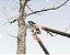 Tesourão de poda tipo anvil, cabo extensível 46,5 a 78 cm - Imagem 2