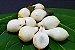Muda Frutinha de Leite ( Cordia taguahyensis ) - Imagem 6