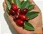 Muda Cereja do Cerrado Vermelha ( Eugenia calycina ) - Imagem 2