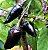 Muda Pimenta Preta  Hungara Black - Imagem 1
