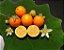 MUDA NARANJILLA ou LULO ( Solanum quitoense ) Para vaso - Imagem 3