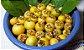 GUABIROBA do CERRADO ou do CAMPO( Campomanesia adamantium ) - Imagem 3