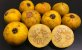 MUDA GUABIROBA GIGANTE ou GUABIRABA ( Campomanesia lineatifolia )  - Imagem 2
