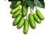 MUDA ABACATE AVOCADO SEM SEMENTE PARA VASO ( Persea americana )  - Imagem 4