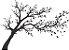 Adesivo de Parede Floral Árvore 07 - Imagem 1
