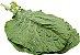 Couve Folha Orgânica - MAÇO - Imagem 2
