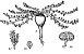Maca peruana (Lepidium meyenii) - Em pó - Imagem 4