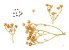 Arruda (Ruta Graveolens) - 20 sementes - Imagem 1