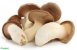 Cogumelo Eryngui Bandeja 200g (Chegada 26.10.21) - Imagem 1
