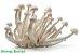 Cogumelo Fresco 200g (Chegada 13.01.20) - Imagem 2