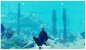 Maneater PS4 (US) - Imagem 6