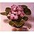 Vaso de violeta  - Imagem 2
