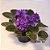 Vaso de violeta  - Imagem 1