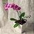 Orquídea phalaenopsis lilas - Imagem 1