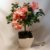 Azaleia Bonsai - Imagem 2