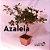 Azaleia Bonsai - Imagem 5