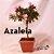 Azaleia Bonsai - Imagem 4
