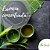 Essência Chá Verde 100g - Imagem 1