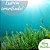 Essência Algas Marinhas 100g - Imagem 1
