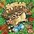 Sugar Gliders - Imagem 1