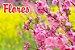 3x Fertilizante Adubo Vita Garden Flores 1 L Concentrado Frete Grátis - Imagem 2