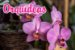 3x Fertilizante Adubo Vita Garden Orquídeas 1 L Concentrado Frete Grátis - Imagem 2