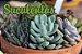 3un Fertilizante Adubo Vita Garden Suculentas 1 L Concentrado Frete Grátis - Imagem 2