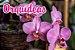 4x Fertilizante Adubo Vita Garden Orquídeas 1 L Concentrado Frete Grátis - Imagem 2