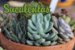 5x Fertilizante Adubo Vita Garden Suculentas 1 L Concentrado Frete Grátis - Imagem 2