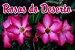 4x Fertilizante Adubo Vita Garden Rosas do Deserto 1 L Concentrado Frete Grátis - Imagem 2